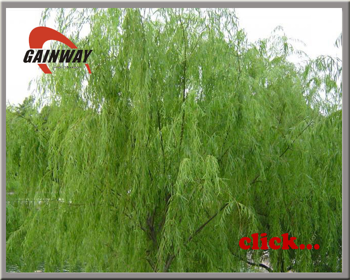 White Willow Bark Extract powder