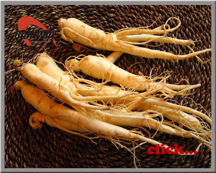 Ginseng Extract-Ginsenosides NLT 10%, 20%, 80%