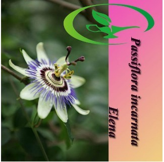 Passiflora incarnata Extract