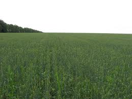 Agricultural Land for sale (Agricultural Farm)