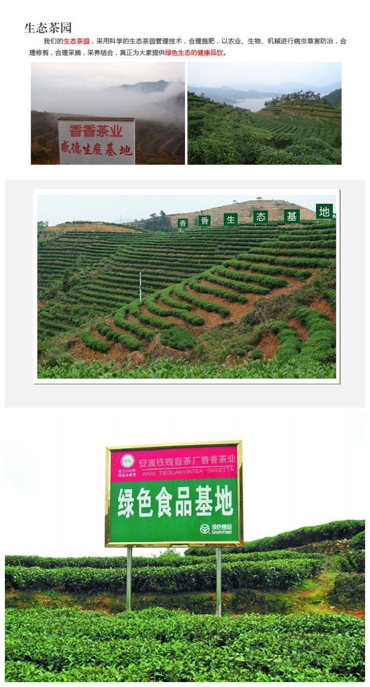 Anxi mountains ecological tieguanyin tea