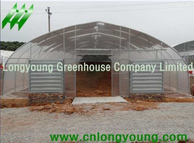 Economical Tunnel Greenhouse