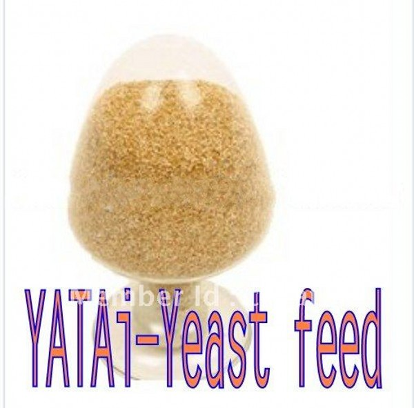 yeast feed-yeast powder