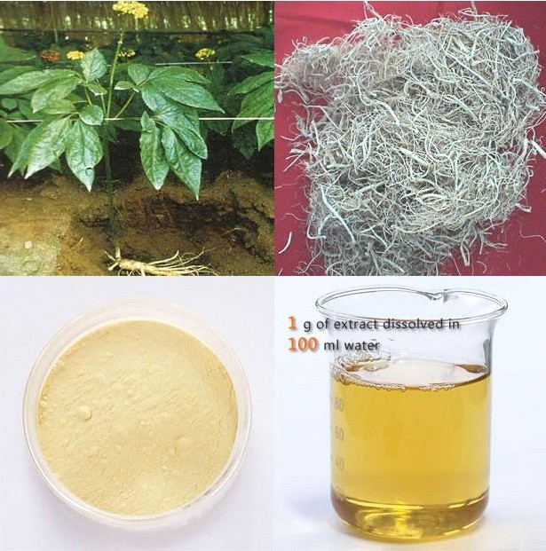 High Quality 100% Nutural Ginseng Extract Powder