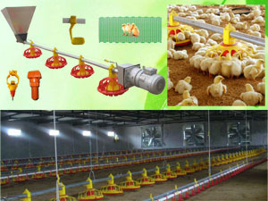 Poultry Chicken Fowl Nipple Drinker Producer China Huntop