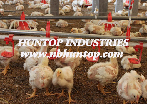 Poultry Nipple Drinking System with Cups supplier Huntop China