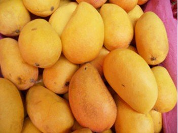 Mango Juice Powder- Flavonoids