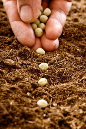 Plant Seeds & Bulbs