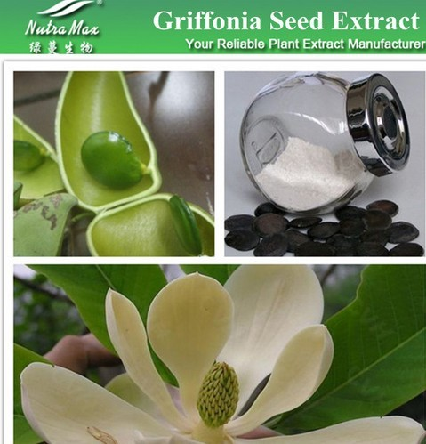 Griffonia simplicifolia Seed Extract 5-HTP(sales06@nutra-max.com)