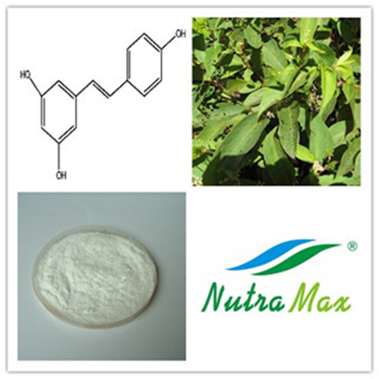 Giant Knotweed Extract(sales06@nutra-max.com)
