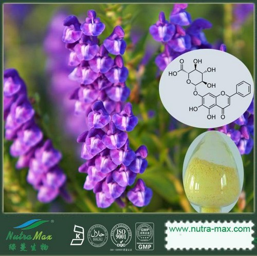 Scutellaria baicalensis Extract(sales06@nutra-max.com)