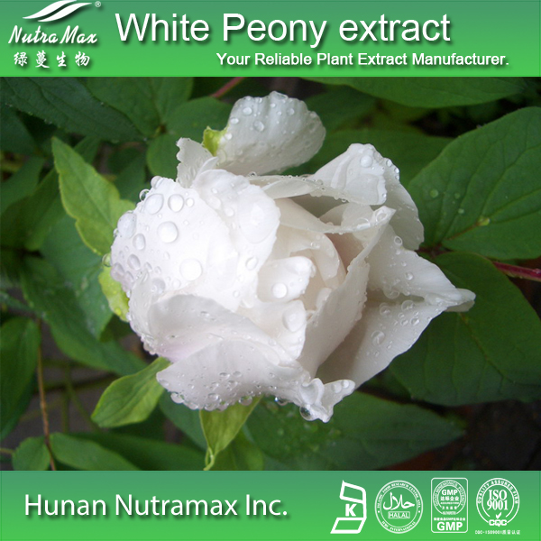 White Peony Extract(sales06@nutra-max.com)