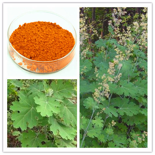 Natural Macleaya cordata Extract/10~50% Sanguinarine&chelerythrine( Alkaloids)