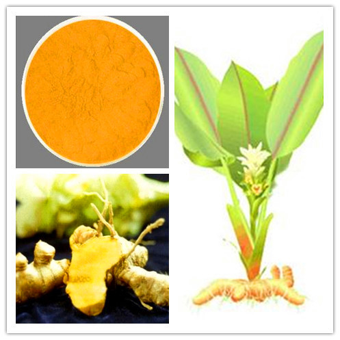 Natural Turmeric Extract 15%~95% Curcumin