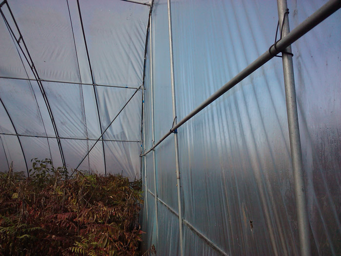 Single-Span Plastic Greenhouse