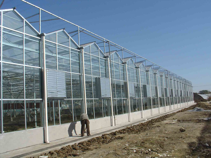 Multi Span Greenhouse