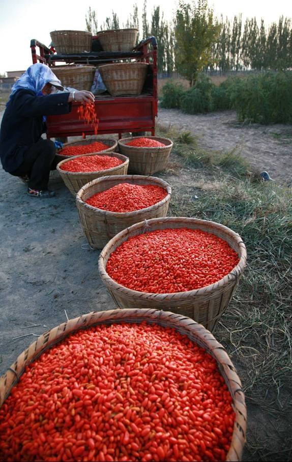Natural Dried Goji berry