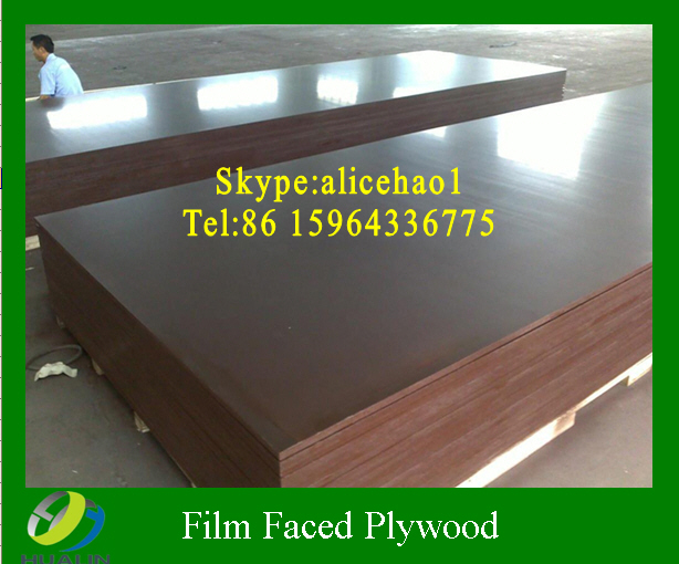 Film faced plywood Eucalyptus core