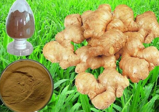 Ginger Root P.E