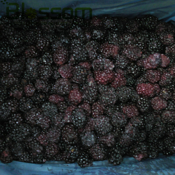 IQF blackberry frozen blackberry