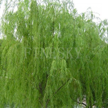 Finesky natural white willow bark extract