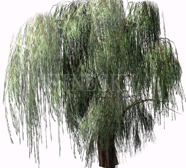 Plant extract white willow bark P.E. supplement