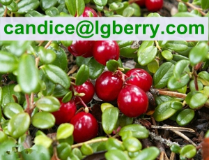 12 years factory supply 5%-70% Cranberry Anthocyanin