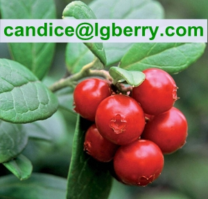 Nature 5-70%Lingonberry Anthocyanin