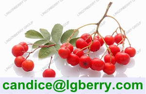 High quality natural anthocyanin of chokeberry extract