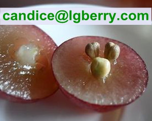 100% natural Grape Seed Extract OPC( Proanthocyanidins )