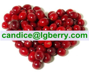 Importted Cranberry fruit100% Pure Cranberry Extract powder