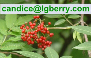 Fruit blend 100% pure elderberry fruit powder