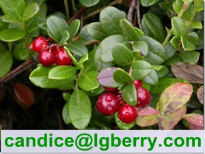(Canada Imported Cranberry) Fruit juice concentrate cranberry extract