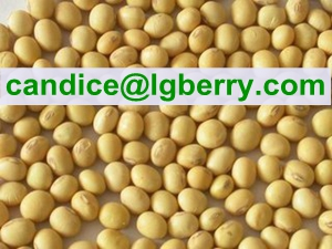 100% Natural Textured Soya Protein (NON-GMO soybean)