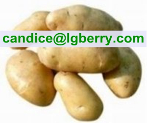 Product Name: Natural Potato Protein powder