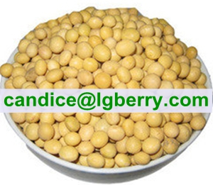 Concentrate Soya protein (NON-GMO soybean)