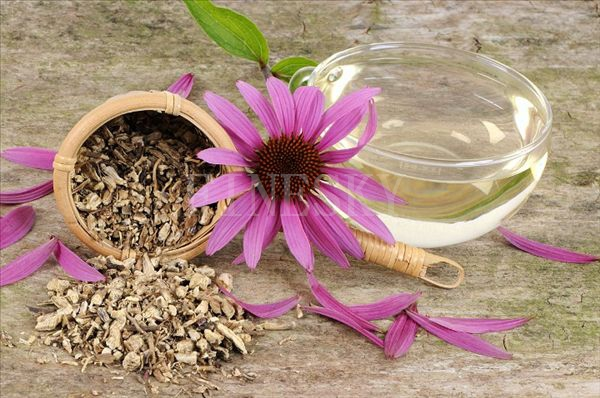 Echinacea purpurea P.E. as food additives