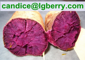 Professional purple sweet potato powder /anthocyanin 5%~70%