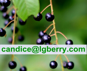 High Quality Prunus Padus Extract