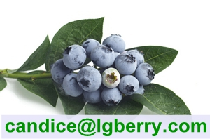 (HACCP) 100% Pure Natural Blueberry Pterostilbene