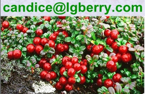 Lingonberry juice powder/lingonberry juice