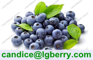 Natural juice powder addtive blueberry juice powder