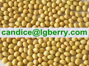 Isolate Soya protein(NON-GMO soybean)