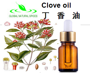 Clove essential oil,Clove oil