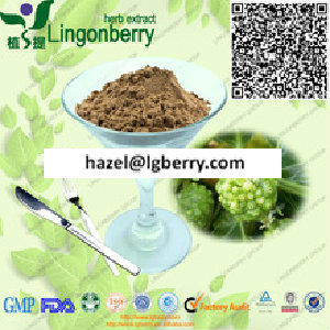 Natural Noni fruit extract/ Morinda citrifolia extract powder
