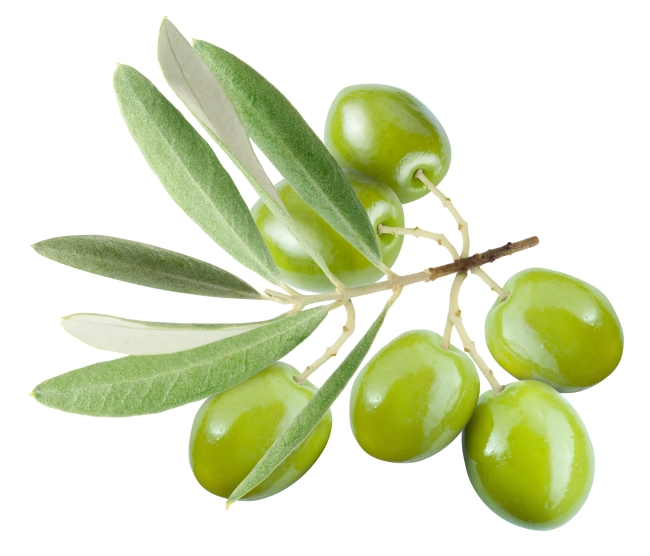 Finesky olive leaf extract powder functional supplement