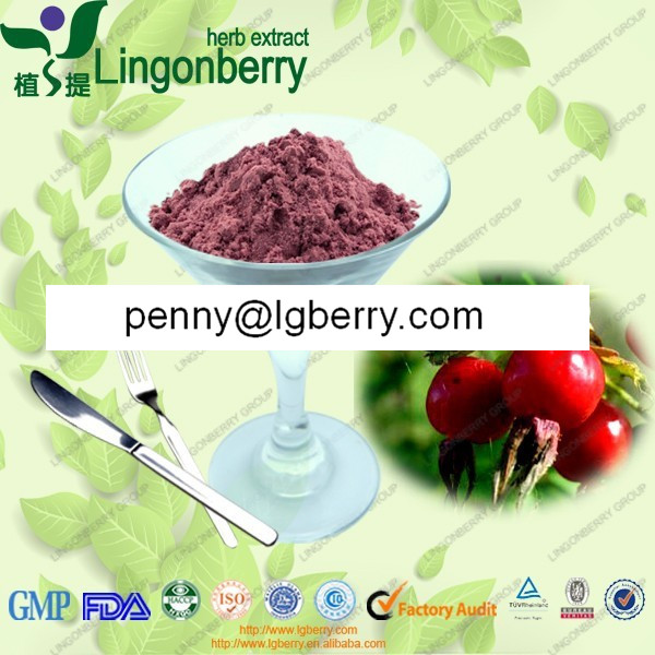 Rose Hip Extract, 5%-50% saponins