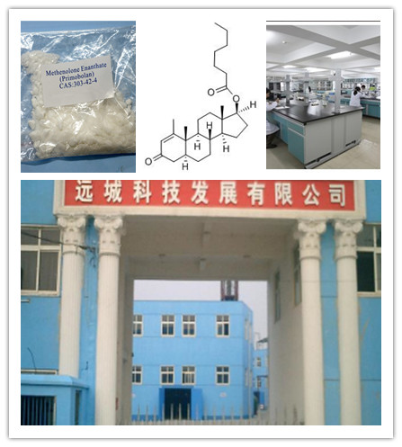Factory Direct Hot Sale Oxandrolone CAS:53-39-4