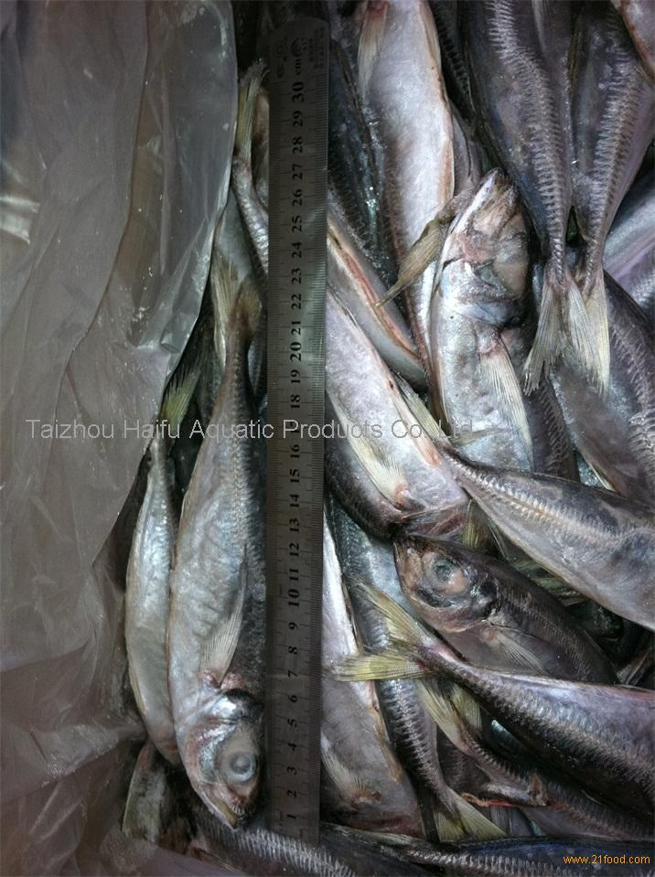 frozen horse mackerel yellow tail