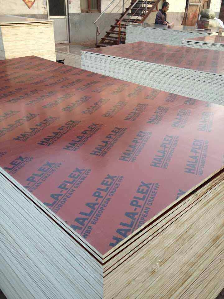 brown with logo film faced plywood sheets for construction formwork
